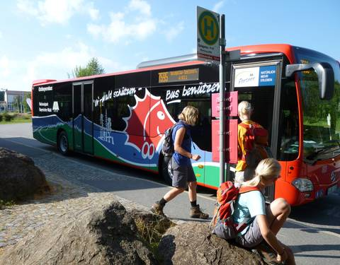 Igelbusse im Nationalpark